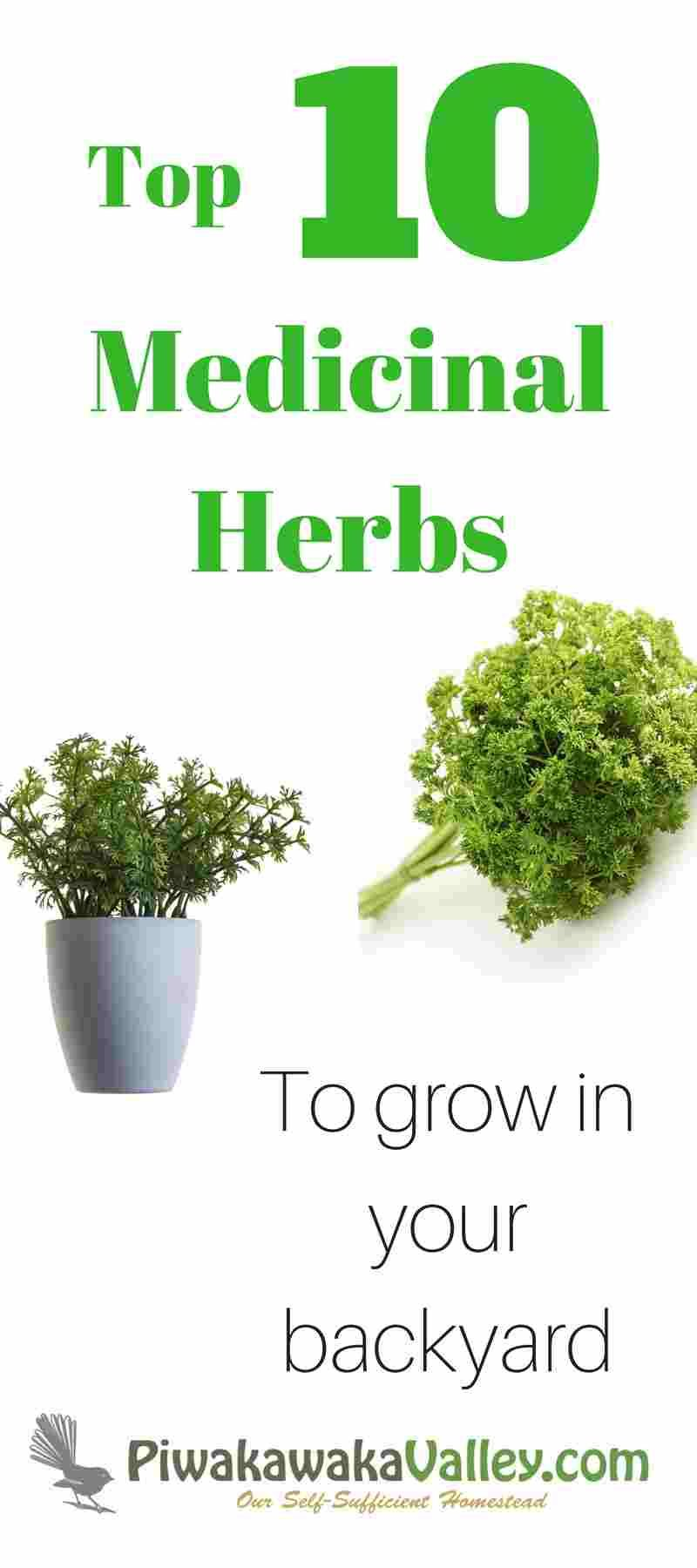 10 Easy to Grow Medicinal Herbs that will Super-Size your First Aid ...
