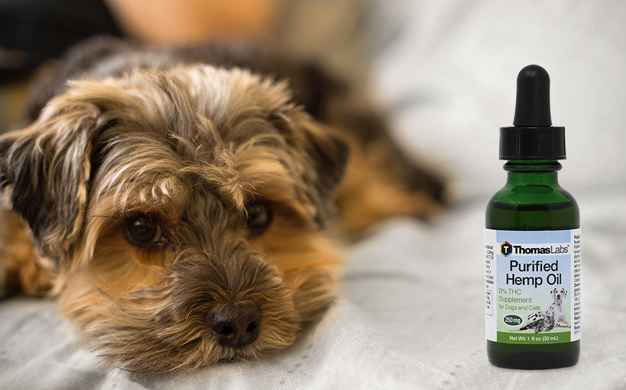 The Benefits of Hemp Oil for Dogs & Other Pets Oils for