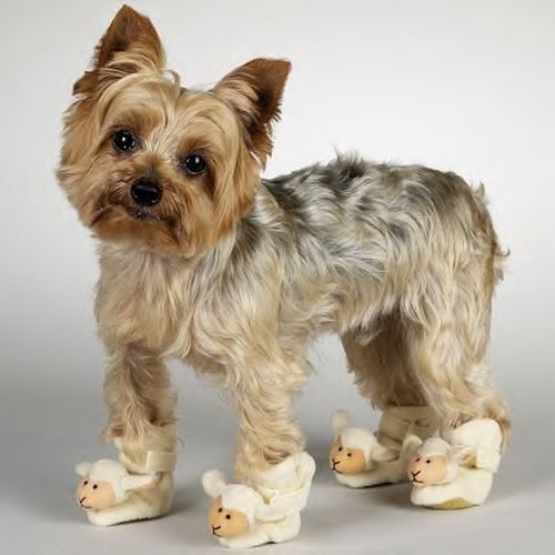 Extra Small Little Lamb Dog Slippers Dog Shoes Chihuahua Poodle ... 2f3a2e3389e9