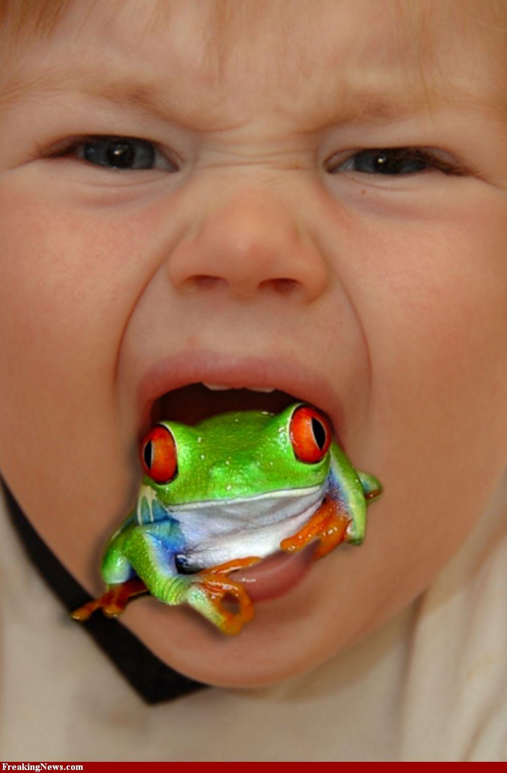 frog throat baby frog tree frogs