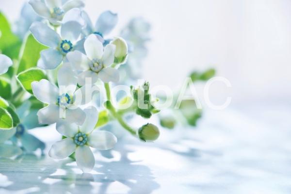 ボード 水色の花 のピン
