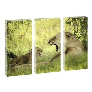 Cats- Kunstdruck auf Leinwand - dreiteilig -je 40cm*80cm