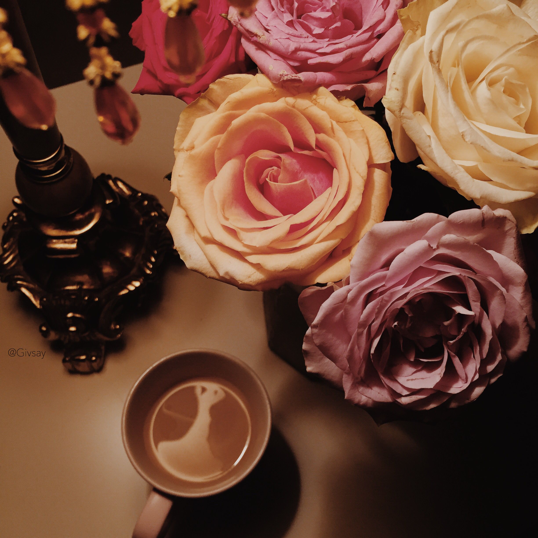 قهوة قهوه ورد ورود Coffee Flowers Rose Plants Flowers