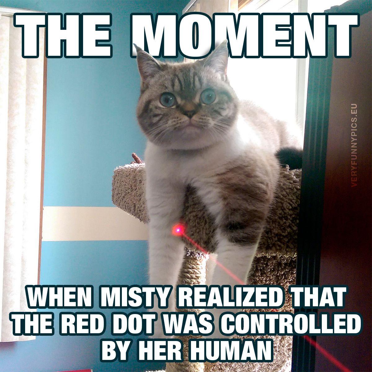 Cat Humor #7