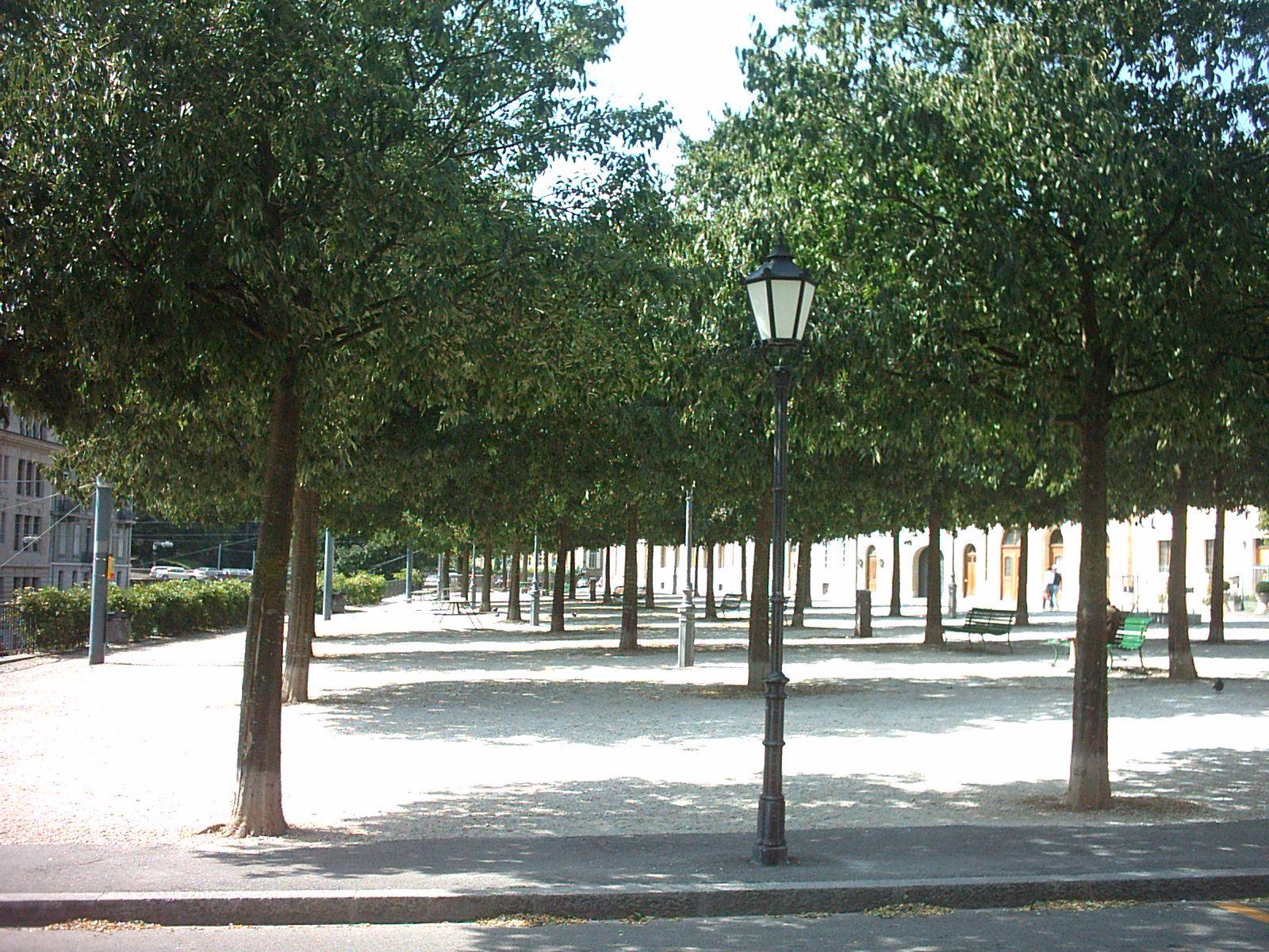 tree bosket - Google 검색