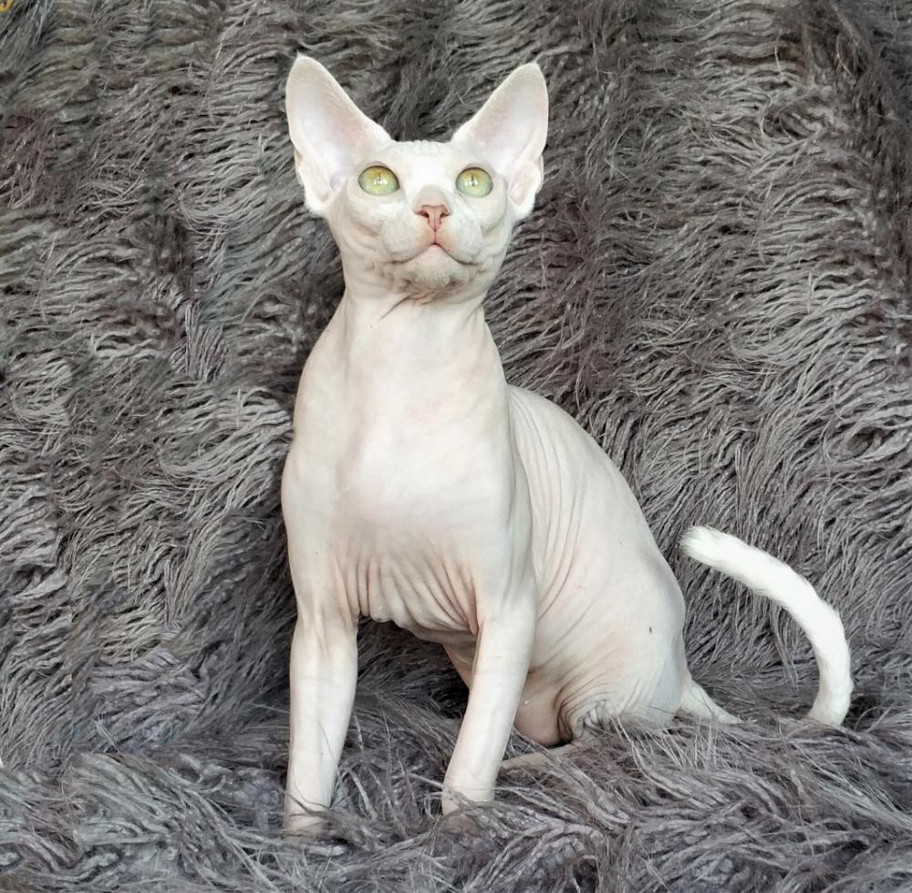Besplatnye Obyavleniya Kotyata Kuplyu Prodayu Kupit Animals Cats Photo