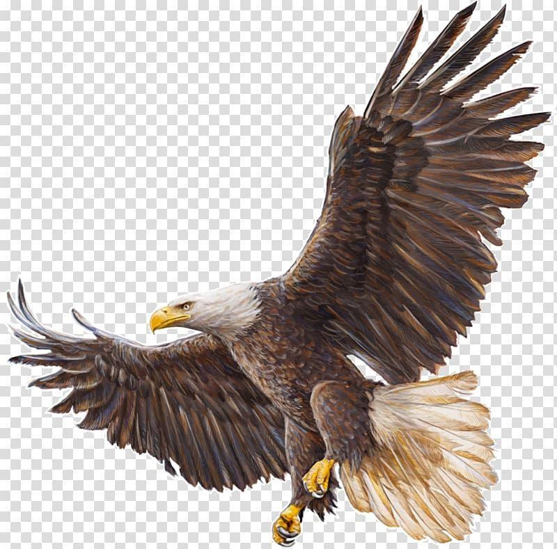 Bald Eagle Drawing Eagle Transparent Background Png Clipart In 2021 Eagle Drawing Bald Eagle Eagle Painting