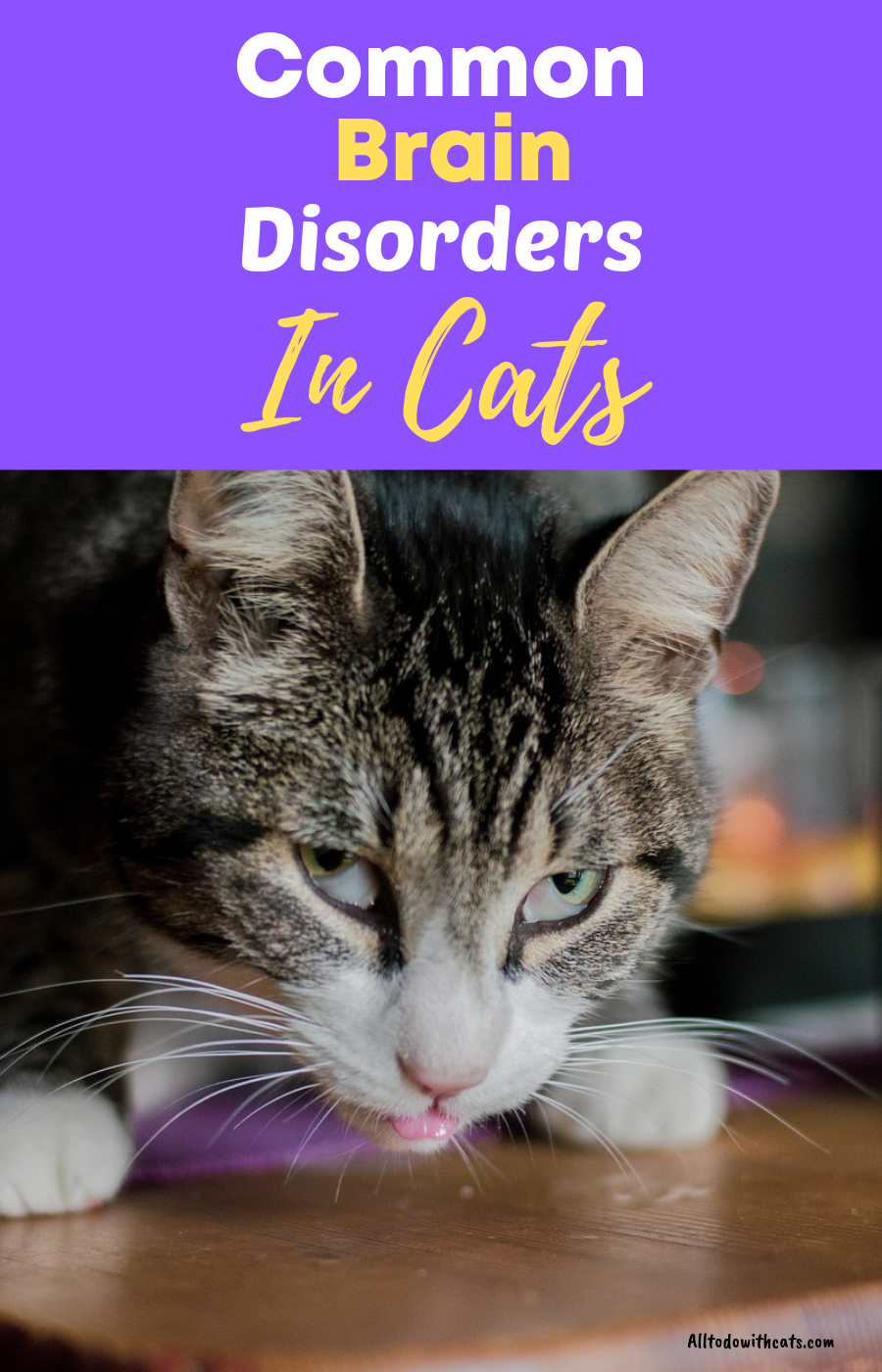 Neurological Problems With Cats Symptoms And Treatments Cat Symptoms Cats Cat Problems