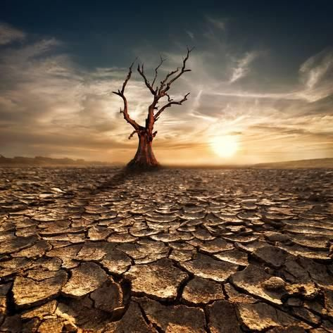 Photographic Print: Global Warming Concept. Lonely Dead Tree under Dramatic Evening Sunset Sky at Drought Cracked Deser by Perfect Lazybones : 16x16in