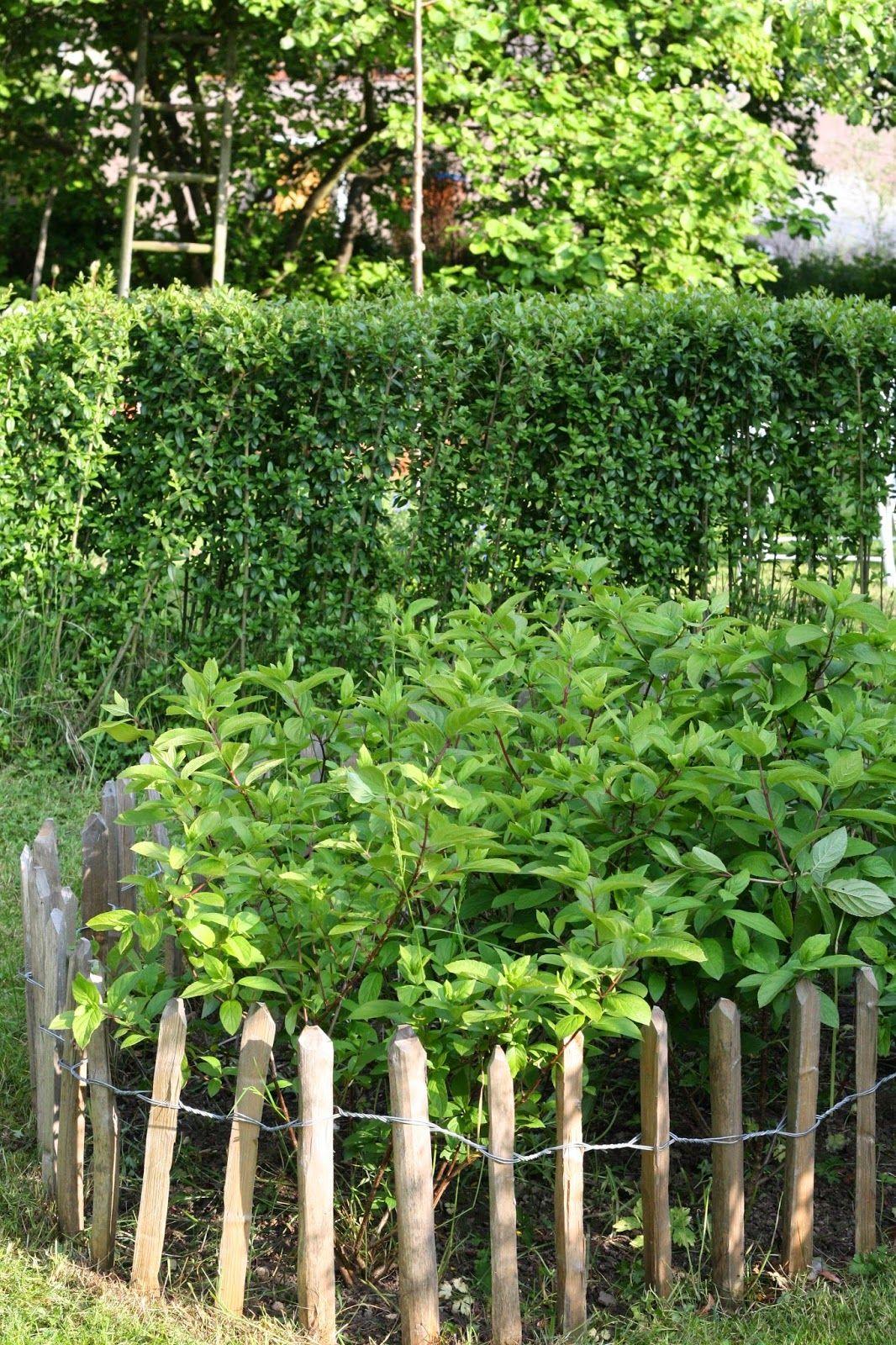 Fancy HerzSt ck Garten Hortensien Staketenzaun