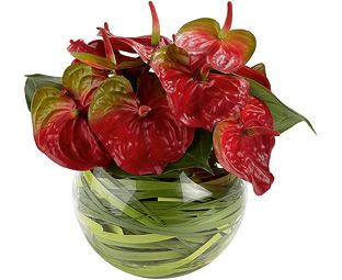 Pin By Roma Persad On Christmas Decor Tropical Floral Arrangements Anthurium Arrangement Corporate Flowers
