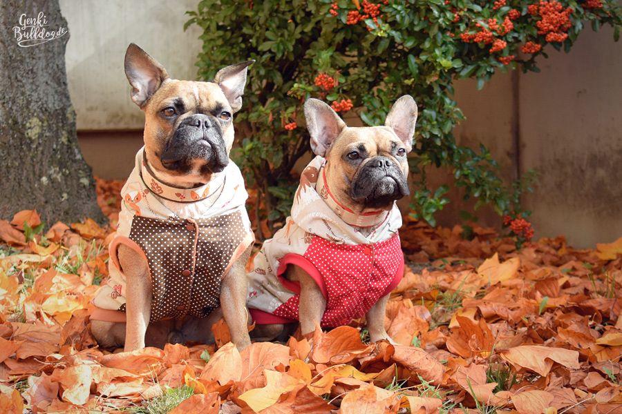 Selbstgenähte Hundemäntel | Nähen | Pinterest | Hunde, Nähen und ...