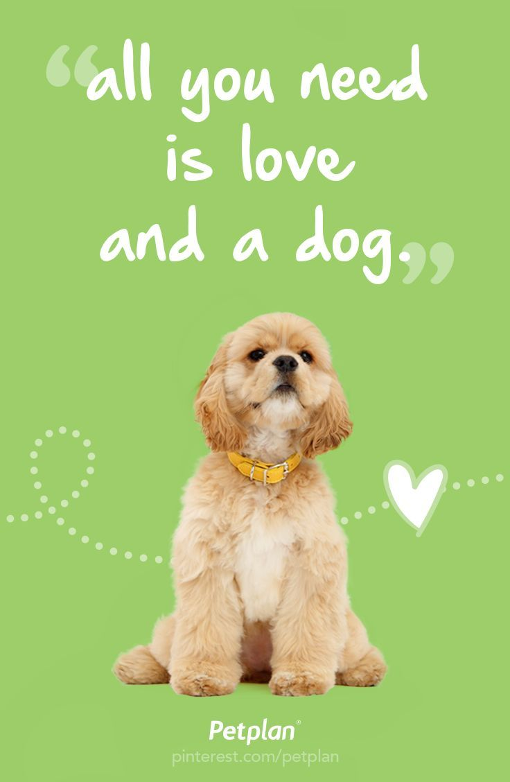 All You Need Is Love And A Dog Deep Dog Thoughts Pet Health
