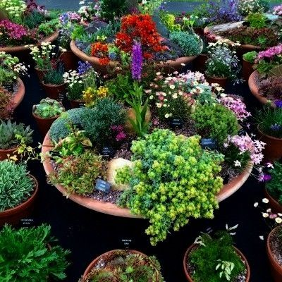 pots 25 inspiring  practical ideas for container gardens  The MiddleSized Garden  Plant alpines and sempervivums in shallow containers Love your pots 25 inspiring  practi...