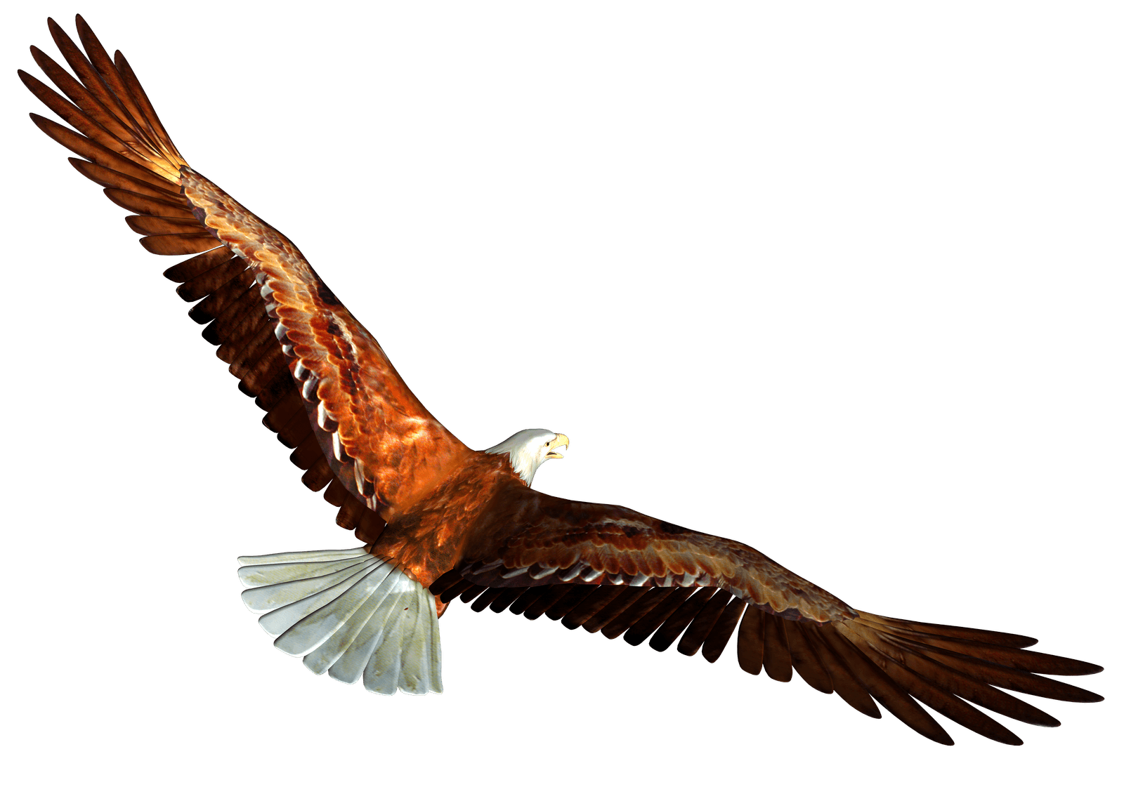Animated Bald Eagle From Behind Png Image Bald Eagle Eagle In Flight Cartoon Clip Art