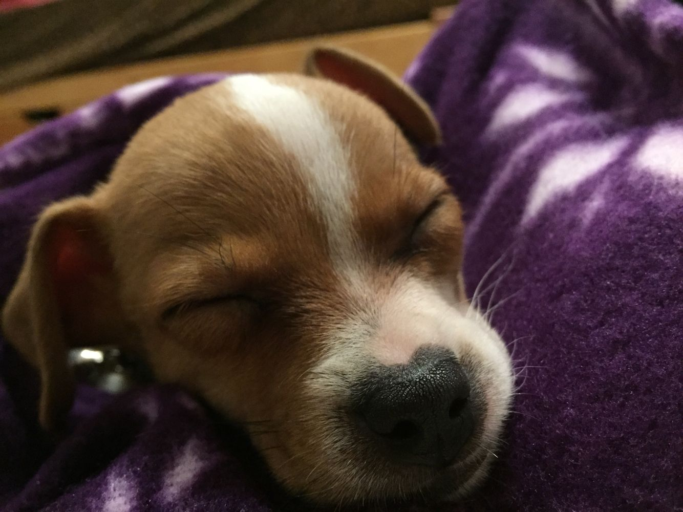 Adorable puppy i watched over cute pet pics pinterest