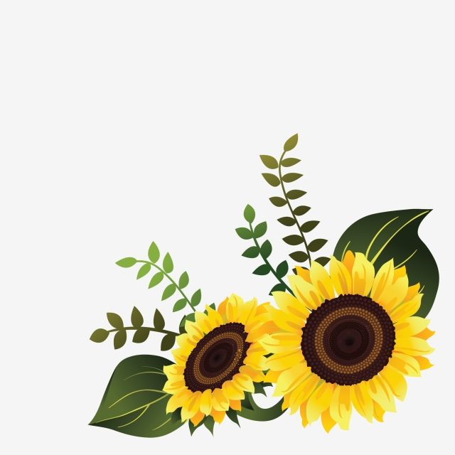 Vetor De Girassol Para Design De Canto Floral Flor Primavera Imagem Png E Vetor Para Download Gratuito Sunflower Drawing Flower Background Wallpaper Nature Iphone Wallpaper