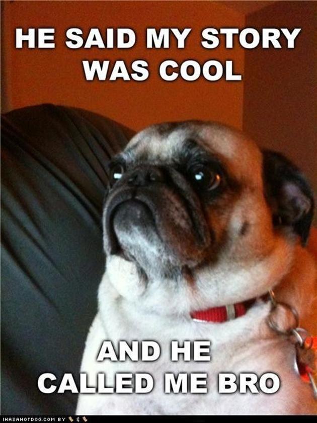 Pug In Toilet Funny Pug Meme Called Me Bro Vitamin Ha Pugs