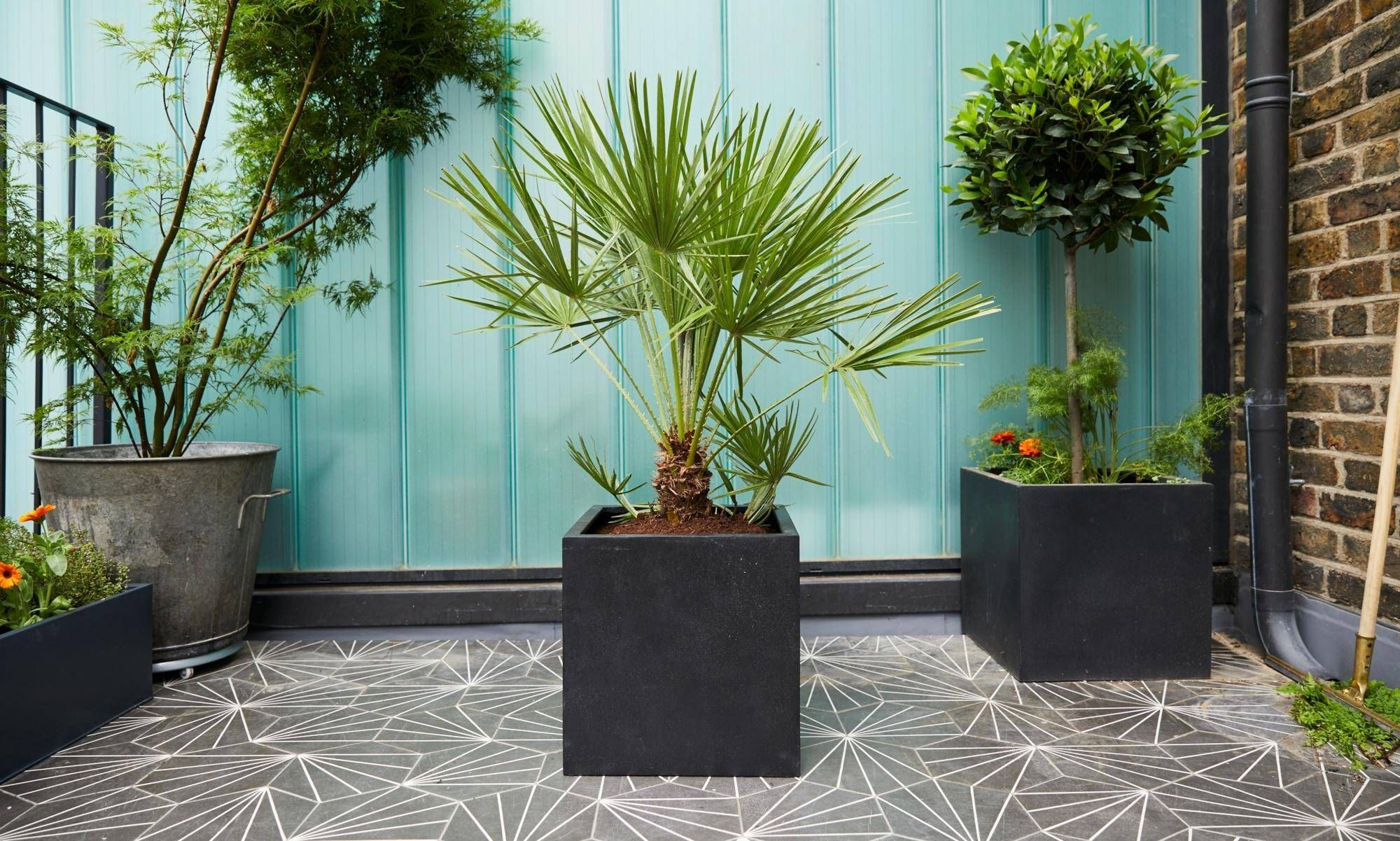The best outdoor plants to buy when starting your city