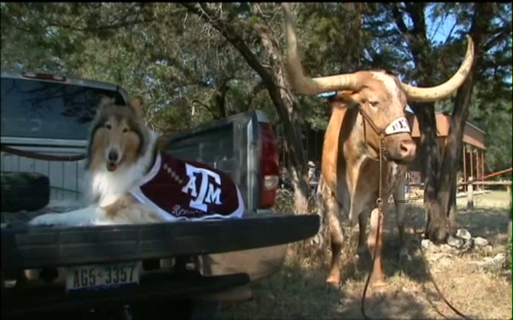 Bevo Hosts Reveille At Home For First Time Ever.
