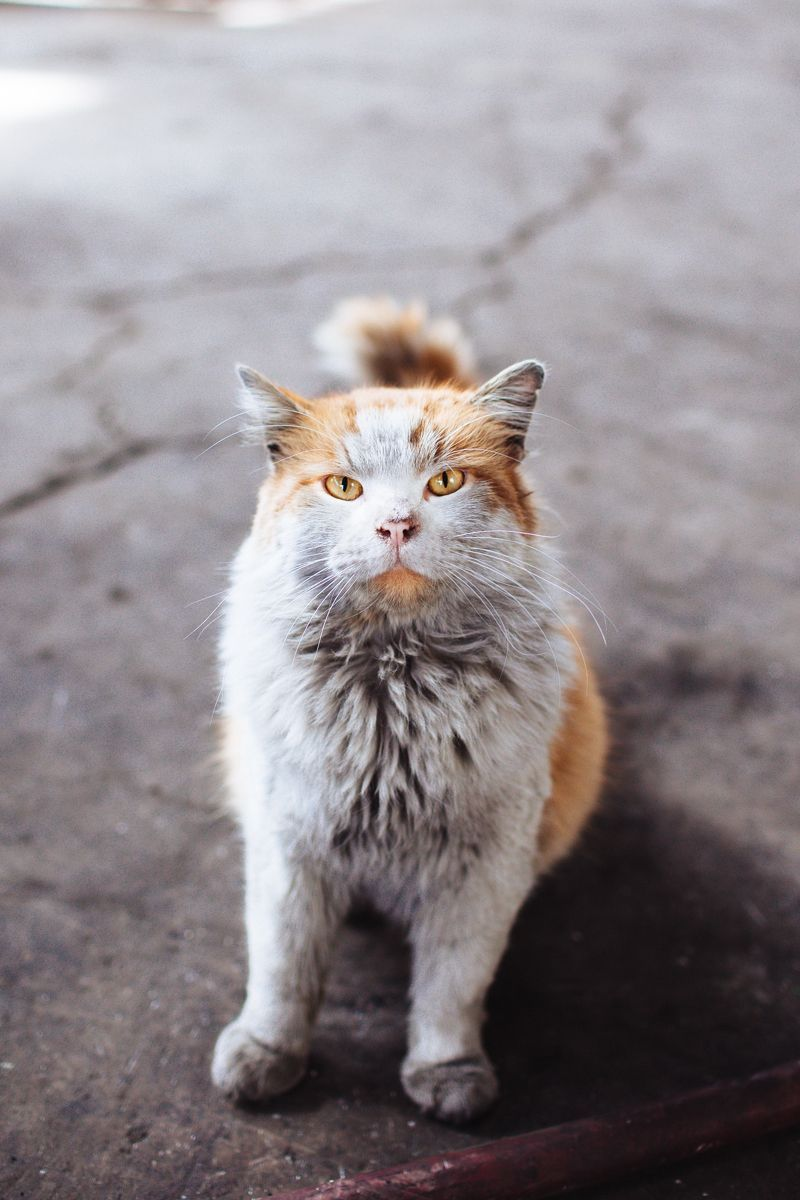 This Beautiful Cat Was Following Me Around During A Senior Shoot He Lives Under The Coal Trains Cute Animals Cute Cats Beautiful Cats