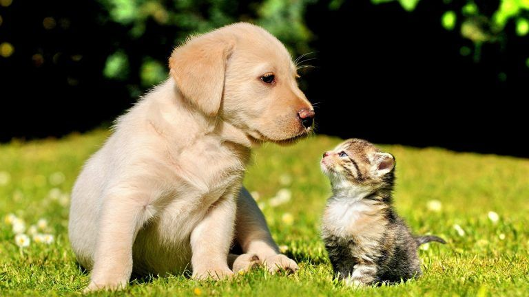 Gogs Cute Friends Best Friends Forever Friendship Puppy Kitten Nature High Quality Wallpaper Cute Puppies And Kittens Puppies Funny Cute Cats And Dogs