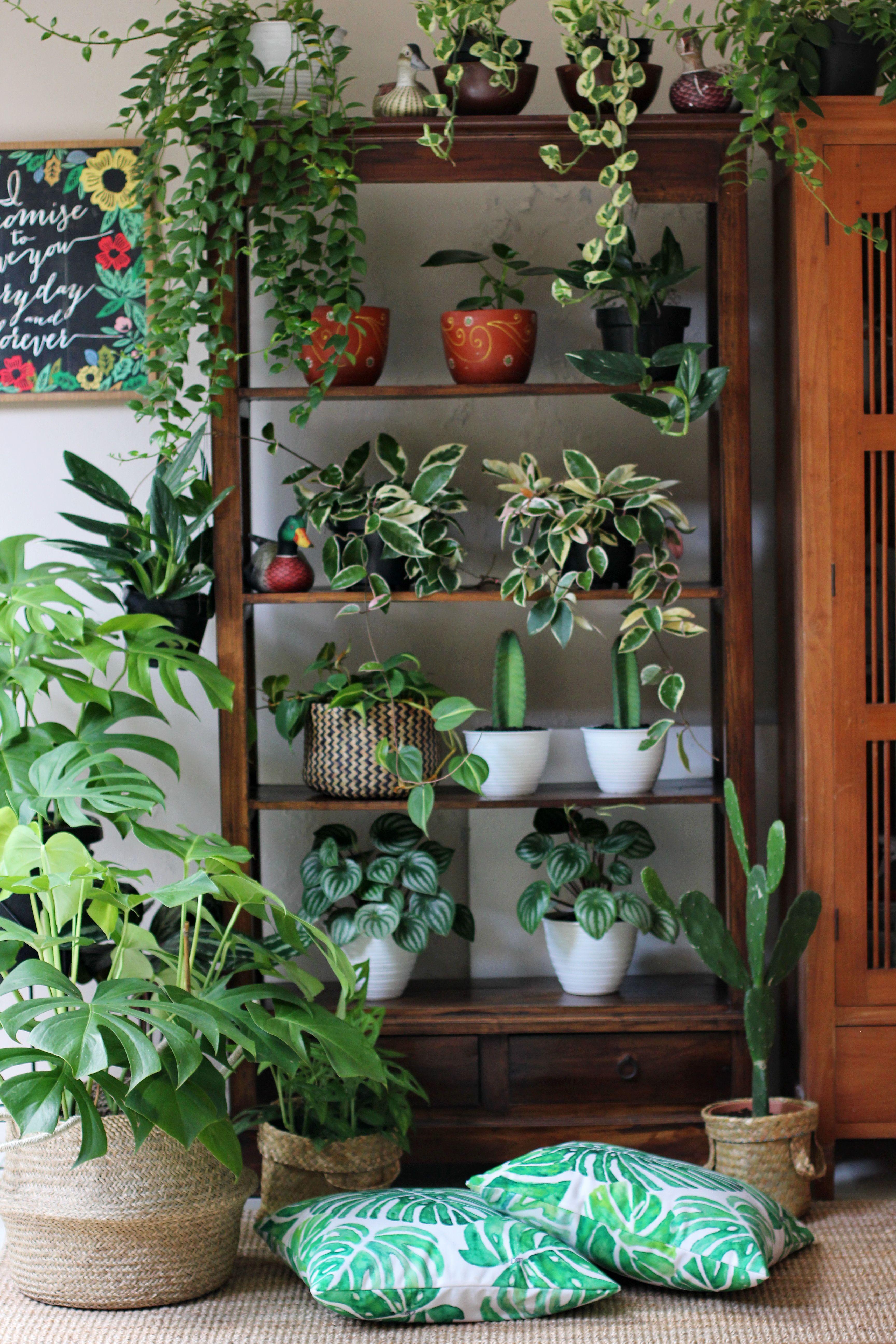 Plants on the shelf.