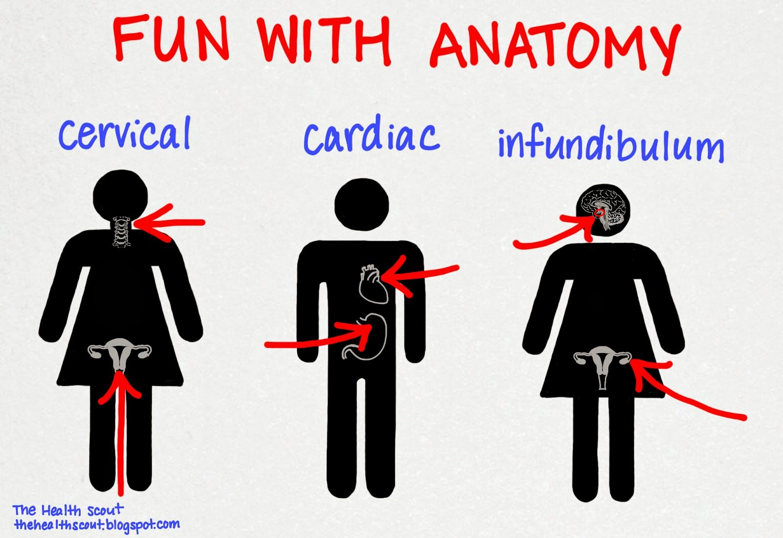The Health Scout Fun With Anatomy Meded Medstudent