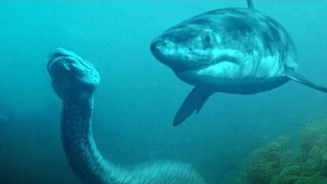 Anaconda vs Shark Fight | Great White Shark vs Anaconda ...