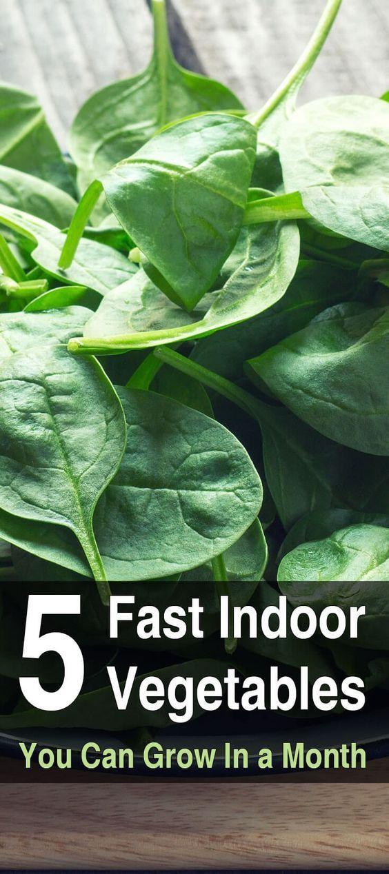 5 Fast Growing Vegetables Vegetable Gardening Indoor 400 x 300