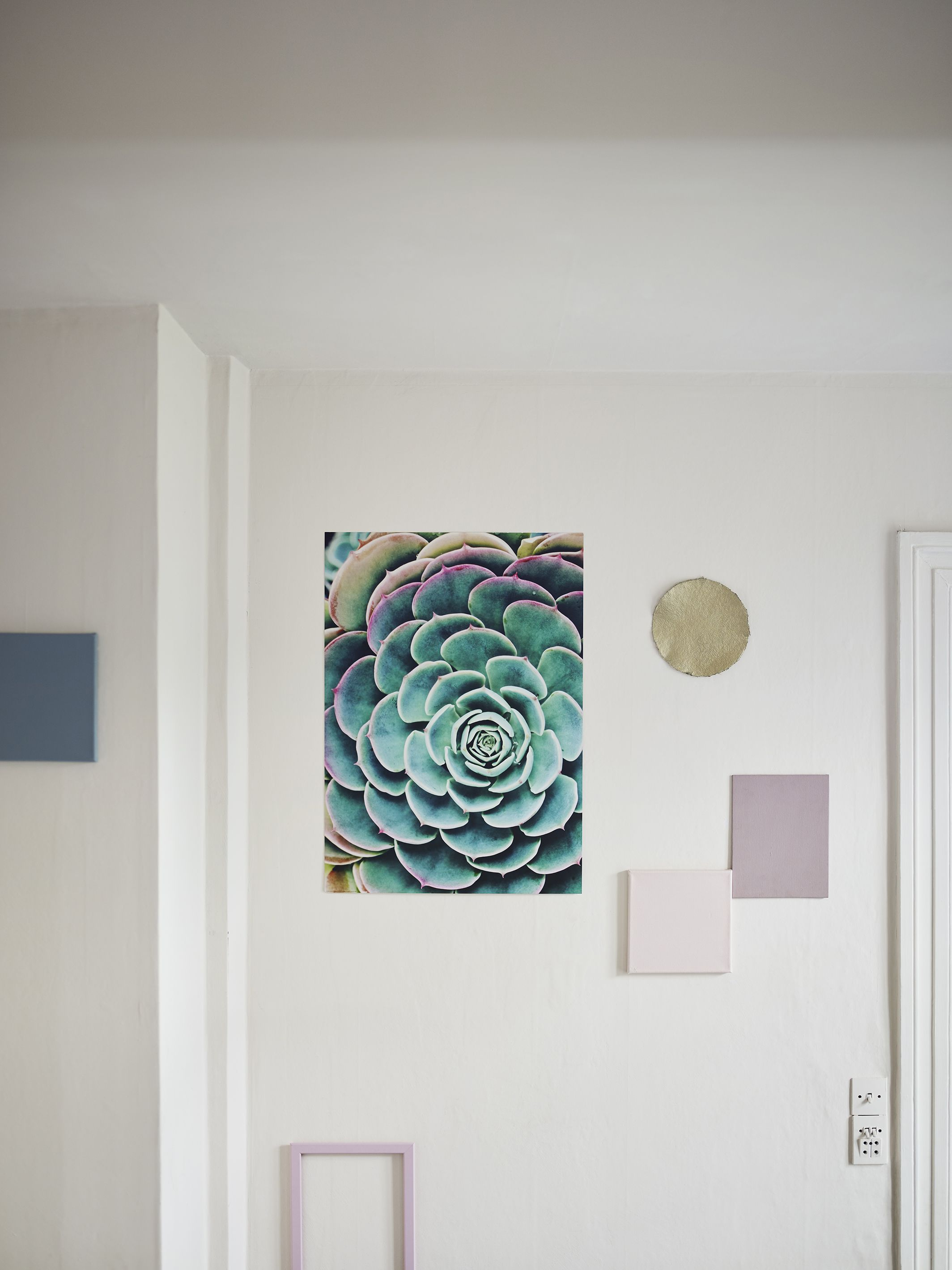Featuring A Succulent Plant, Let BILD Poster Mesmerise Your Eyes In  Turquoise And Pink Tones