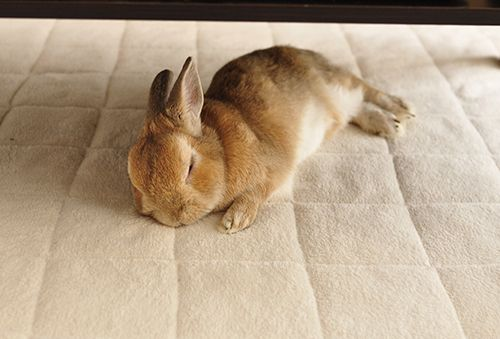 Bunnies おしゃれまとめの人気アイデア Pinterest Tanecia Dedios 可愛すぎる動物 子うさぎ かわいいウサギ