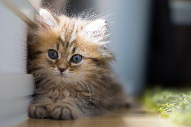Is This The World S Cutest Kitten Kittens Cutest Cutest Kittens Ever Cute Cats Photos