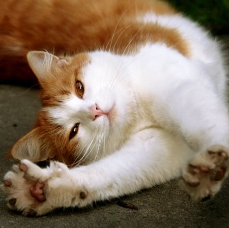 Um Does Your Cat Flirt With You Catster Puppies And Kitties Cats Beautiful Cats