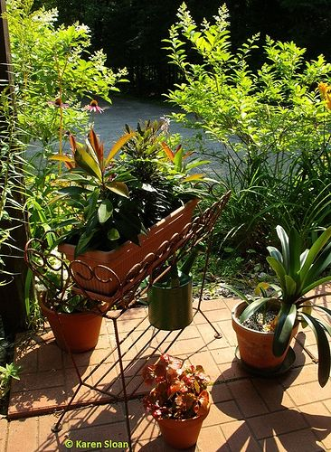 Morning sunshine on the veranda.