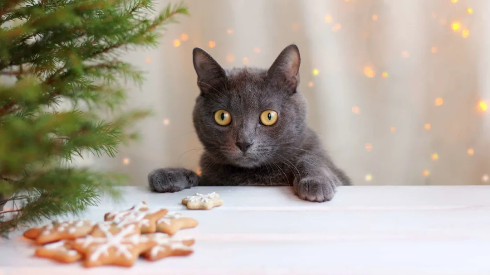 Trader Joe's Is Selling an Advent Calendar for Cats Pets