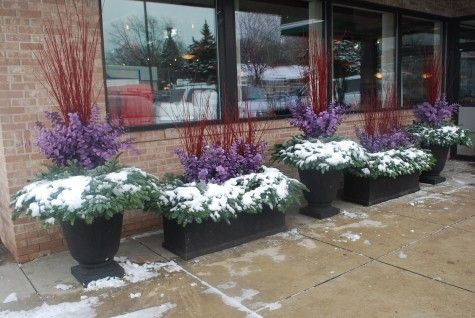 winter containers in red and lavender