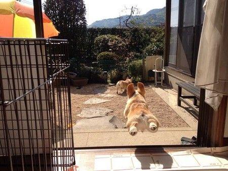 dog 庭へジャンプ