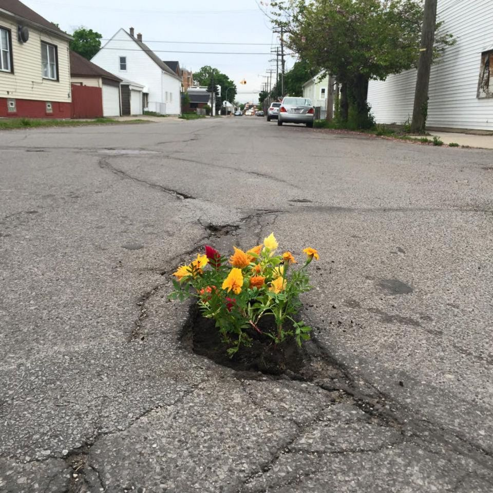 Planting Flowers Becoming Popular Protest Of Potholes With Images