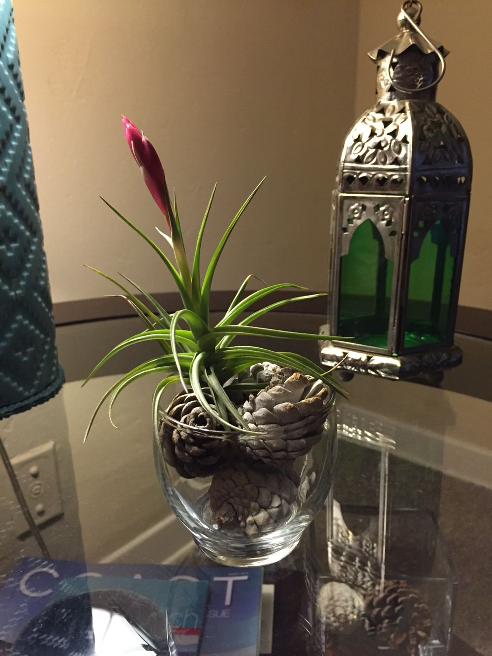 My 1st flowerbud on my airplant. Had waited awhile for it to have its 1st flower bud soon to blossom.