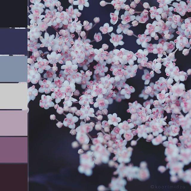 #colorswatches #flora #nature #flower