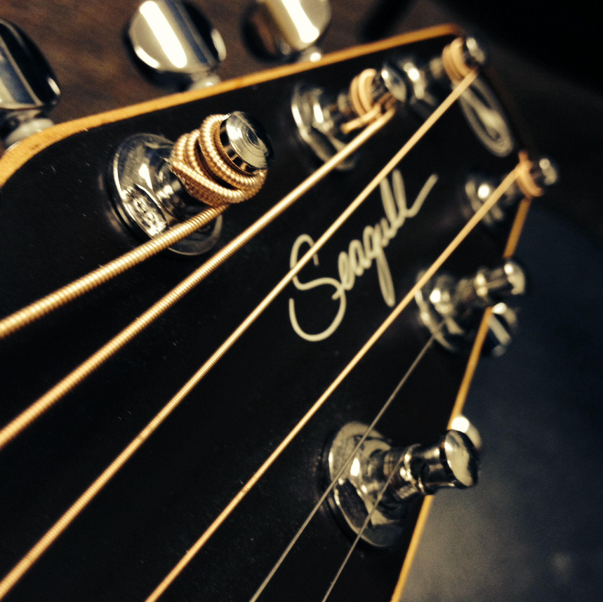 My fantastic seagull guitars gng guitarlife pinterest