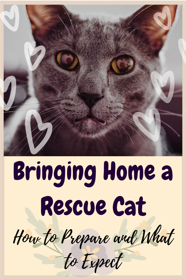 Bringing Home A Rescue Cat How To Prepare And What To Expect Cat Rescue Cat Online Cats
