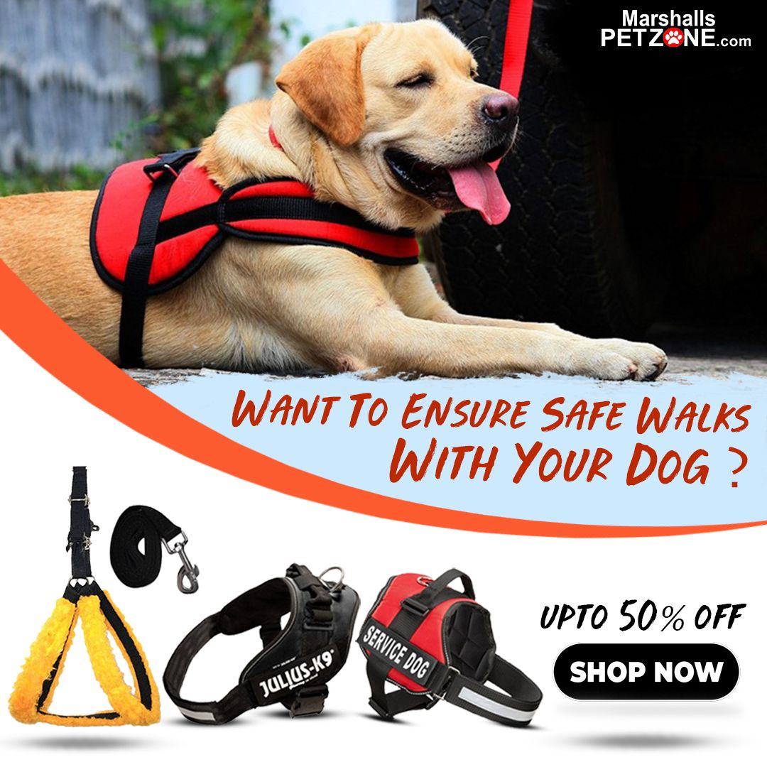 Want To Ensure Safe Walks With Your Dog Dogs Body Harness Your Dog