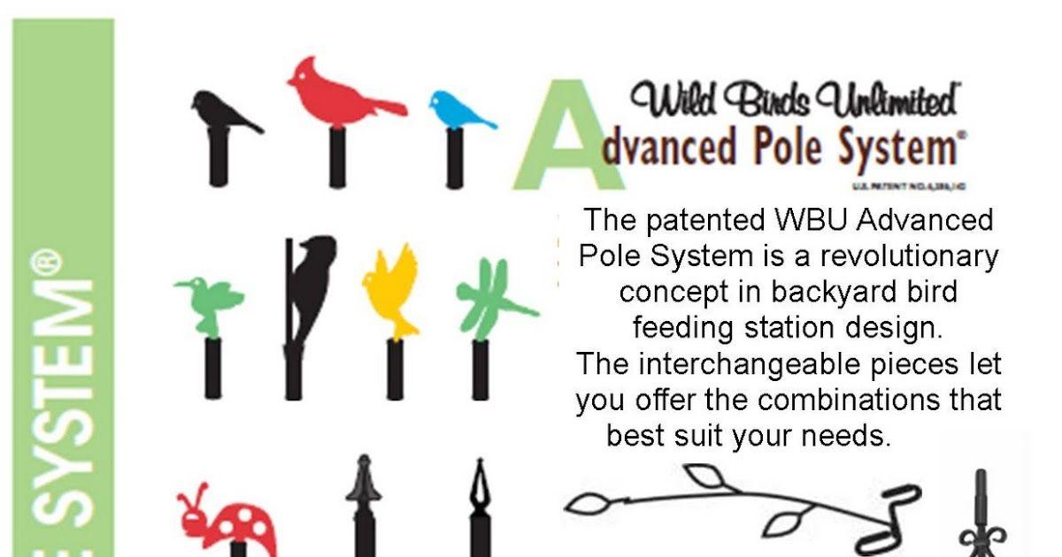 Wild Birds Unlimited Advanced Pole System Best Bird Burung Liar Lucu Bijak