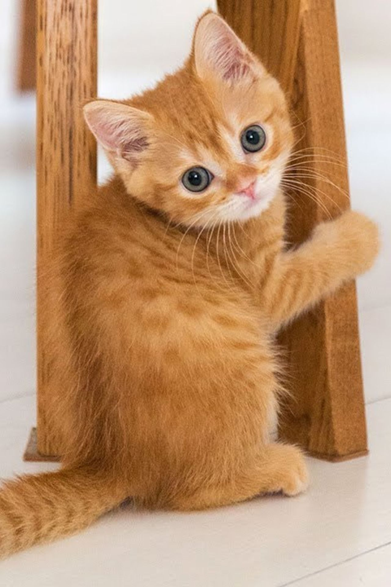 Pin By Susan Kahle On Here Kitty Kitty Cute Cats Cute Cats And Kittens Cute Baby Animals