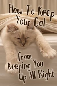 Is Your Cat Prepared In Case Of An Emergency Cat Meowing At Night Cats Sleeping Kitten
