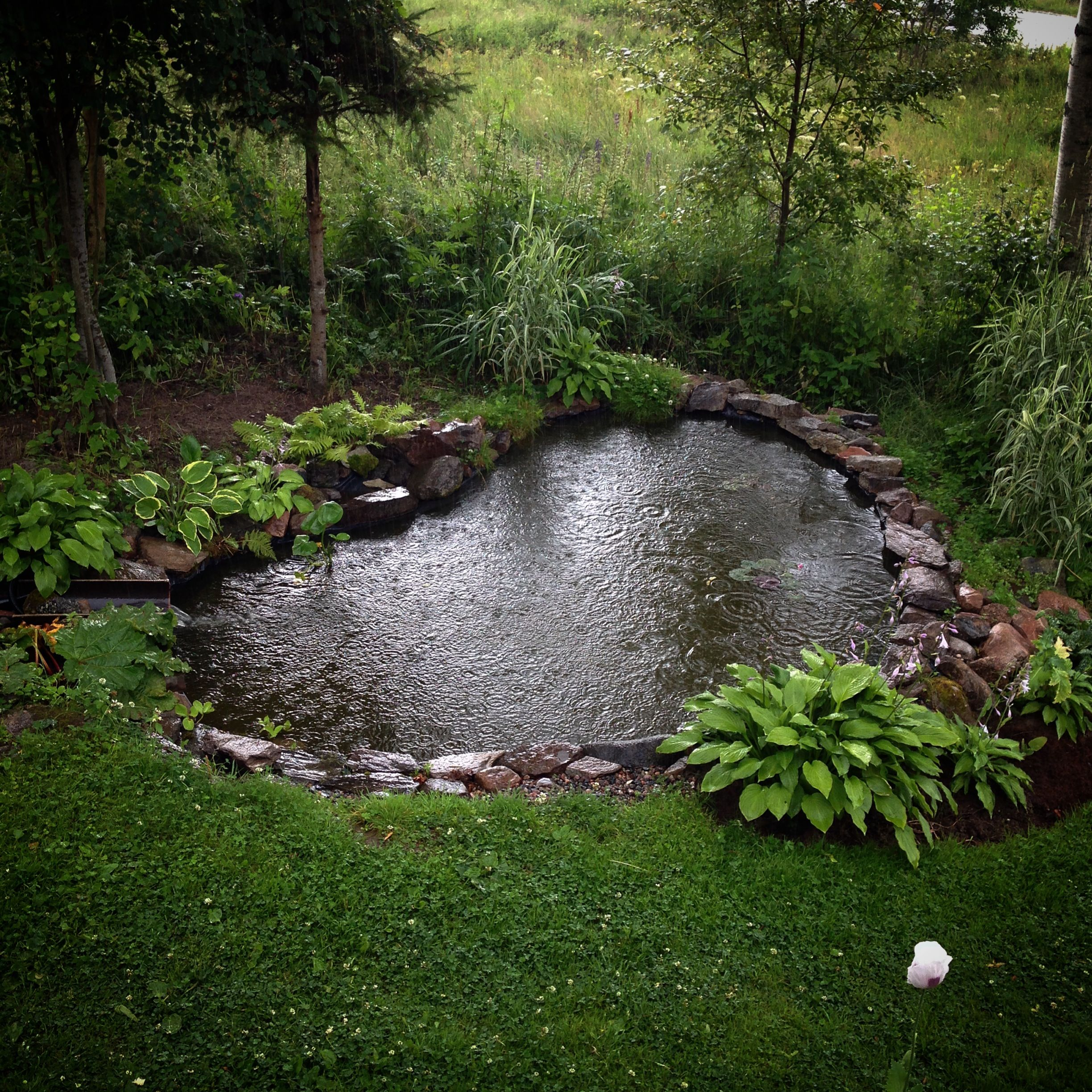 Gardenpond waterfeatures heart shaped garden pond with for Koi pool water gardens thornton