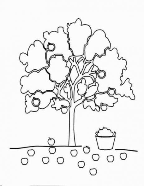 apfelbaum malvorlagen malvorlagen zum drucken ausmalbild