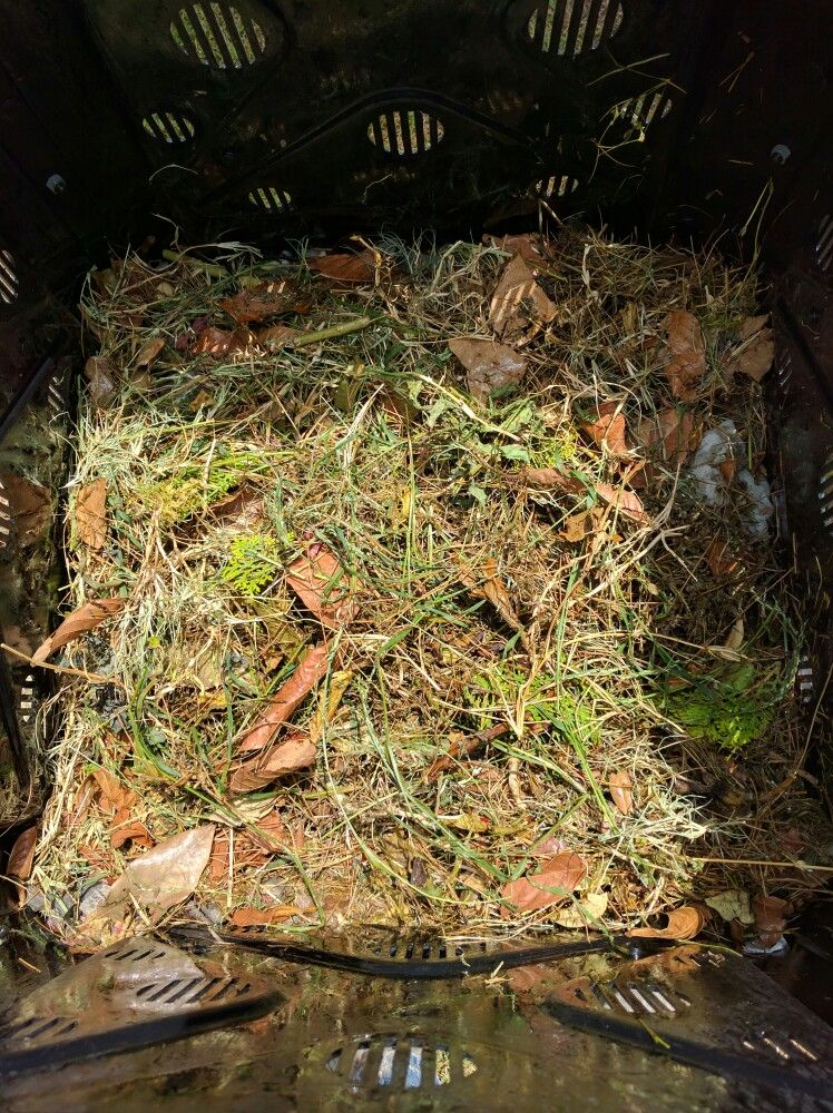 Home made compost#greens#eggshells#grass#manure#fruit#veggies#coffeegrinds